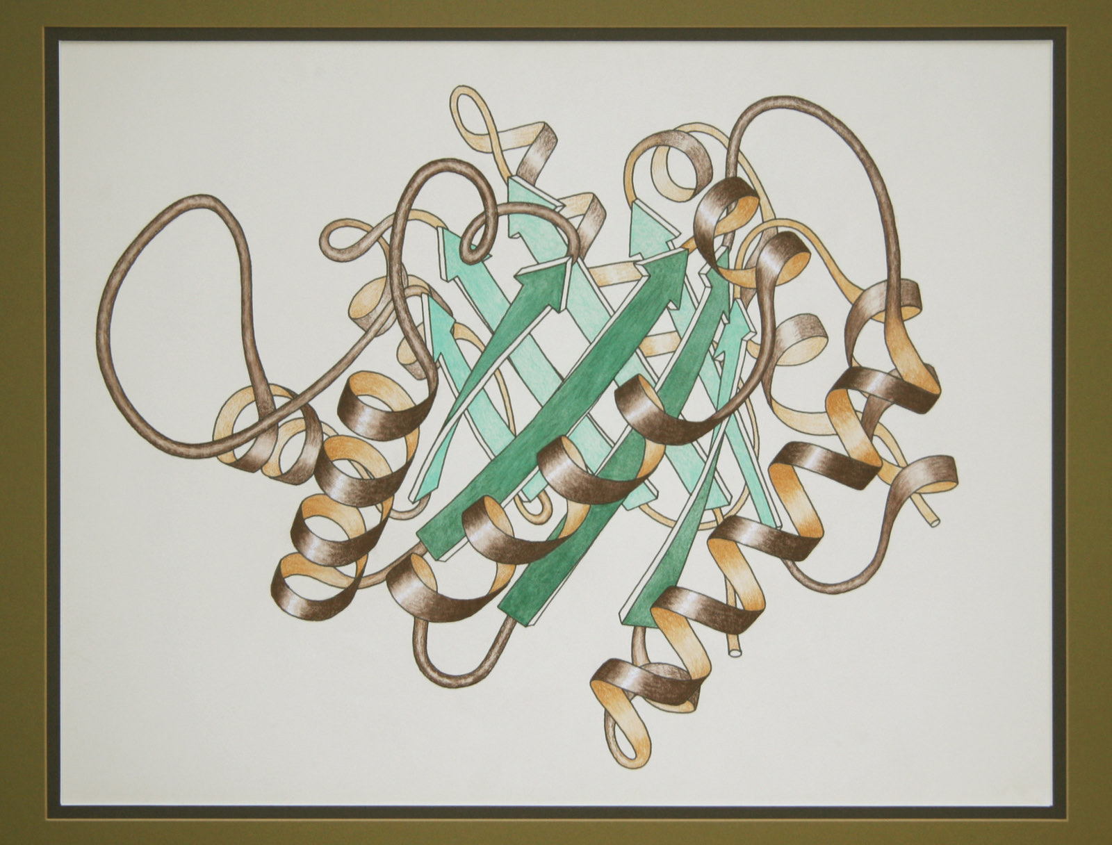 The most iconic of Richardson's ribbon drawings, Triose Phosphate Isomerase Ribbon. This image was Wikipedia's picture of the day on November 9, 2009.