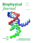 Coarse-Grained Model of RNA Provides Insight into RNA Strand Displacement Reaction