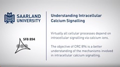 Understanding Intracellular Calcium Signalling