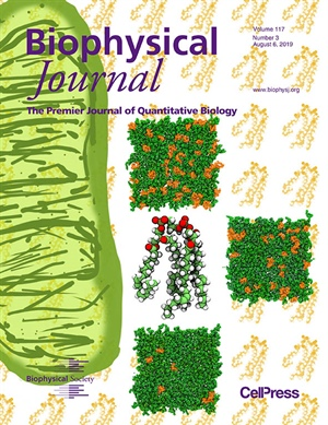 Structure and Dynamics of Model Mitochondria Membranes