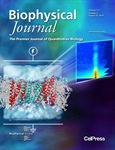 Voltage-Dependent Profile Structures of a Voltage-Gated K+ Channel