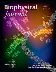 New Perspective on Gene Regulation Highlighted on BiophysJ Cover
