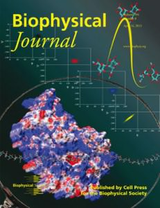 Enzymes Sliding on the New BiophysJ Cover