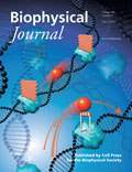Roadblock Molecules on the BiophysJ Cover