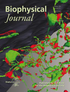 3D Cellular Membrane Systems Highlighted on BiophysJ Cover