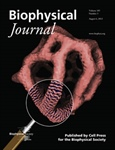 Biological Membrane Goes from Sphere to Reticular Structure on BJ's Latest Cover