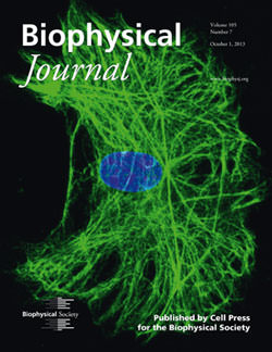 A Typical Vimentin Intermediate Filament Network Makes BJ Cover