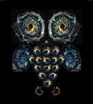 The Science Behind the Image Contest Winners: A Traction Owl