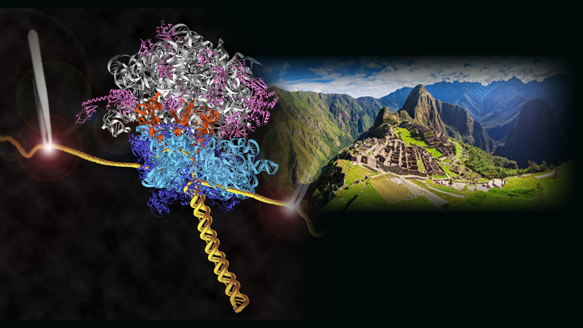 Revisiting the Central Dogma of Molecular Biology at the Single-Molecule Level Cover Image